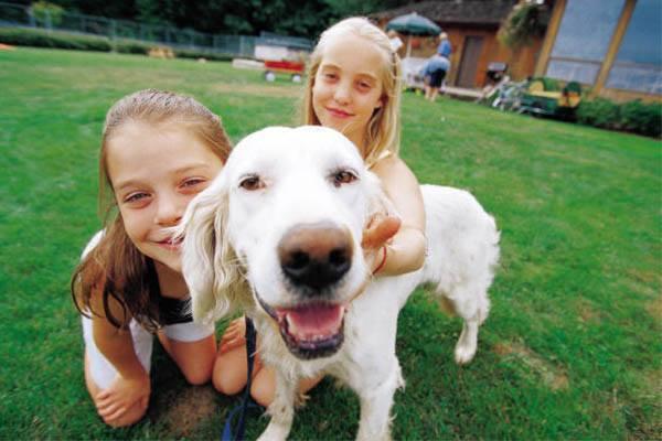 lover-dog